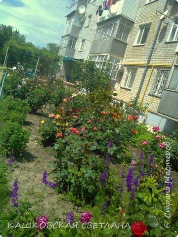 Покажу вам мой раек и соседский заодно. Клумбы вдоль дома идут. Нашла у себя старенькие фотки, сейчас много новых цветов появилось.  фото 3