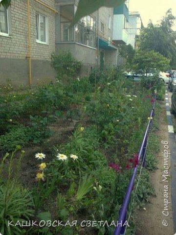 Покажу вам мой раек и соседский заодно. Клумбы вдоль дома идут. Нашла у себя старенькие фотки, сейчас много новых цветов появилось.  фото 4