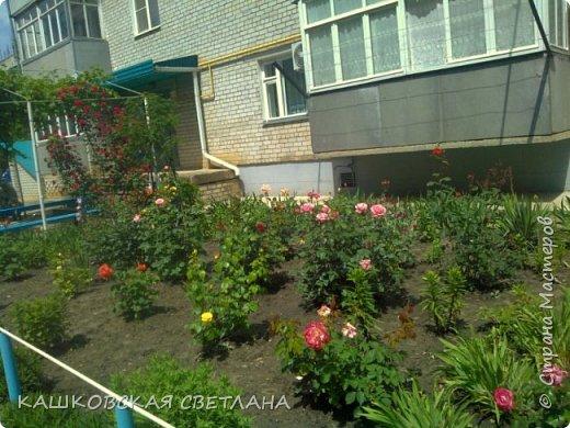 Покажу вам мой раек и соседский заодно. Клумбы вдоль дома идут. Нашла у себя старенькие фотки, сейчас много новых цветов появилось.  фото 6