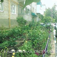 Покажу вам мой раек и соседский заодно. Клумбы вдоль дома идут. Нашла у себя старенькие фотки, сейчас много новых цветов появилось.  фото 2