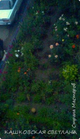 Покажу вам мой раек и соседский заодно. Клумбы вдоль дома идут. Нашла у себя старенькие фотки, сейчас много новых цветов появилось.  фото 7
