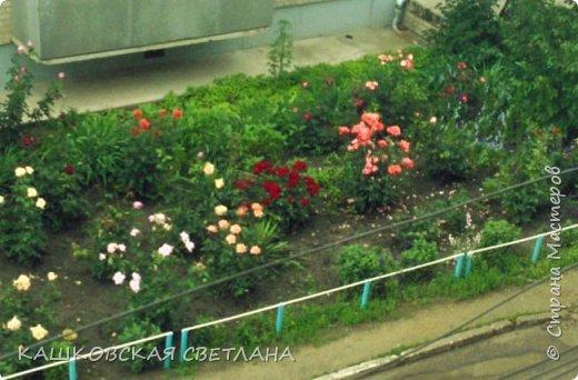 Покажу вам мой раек и соседский заодно. Клумбы вдоль дома идут. Нашла у себя старенькие фотки, сейчас много новых цветов появилось.  фото 8