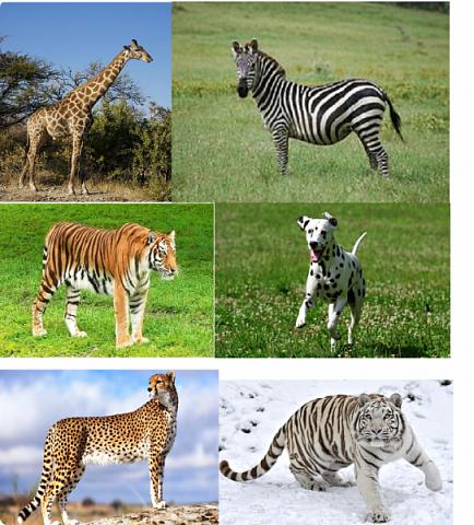 """Всем огромный приветик! Представляю вам АТС карточки """"Пятнисто-полосатые"""" При создании АТС использовала авторскую технику Татьяны Сорокиной http://stranamasterov.ru/user/151613 Техника ПЕЙП-АРТ.  Вначале я хотела назвать серию """"Животные Африки"""". Но тут выяснилось, что тигры не живут в Африке. И тогда бы у меня была серия из трёх карточек. Поэтому я решила назвать пятнисто полосатые и сделала ещё три карточки. Эта серия самая трудная для меня была, но я довольна собой. Несколько раз мне пришлось переделывать даже, потому что мама сказала что плохо сделала.   Следующая моя серия АТС карточек будет только ближе к декабрю, потому что я решила отдохнуть. Устала, и учеба началась, не успеваю отдыхать. Мама тоже сказала, что учёба главнее.  Но я буду с удовольствием заходить к вам в гости и писать комментарии :-)   Я должна АТС карточки мастерицам Элайджа http://stranamasterov.ru/user/399311 (за """"Останови мгновенье""""),  p_olya71 (Ольга) http://stranamasterov.ru/user/368861 (за """"Игрушки"""") ИРИСКА 2012 (Ирина) http://stranamasterov.ru/user/191152 (за """"Перья""""), Фасинасьён (Татьяна) http://stranamasterov.ru/user/197116 (за """"Стихии"""") прошу их выбирать, если им понравиться. фото 17"""