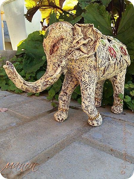 слон фото 4