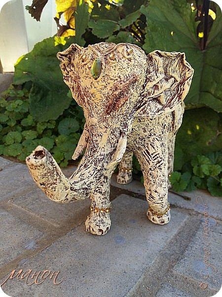 слон фото 5