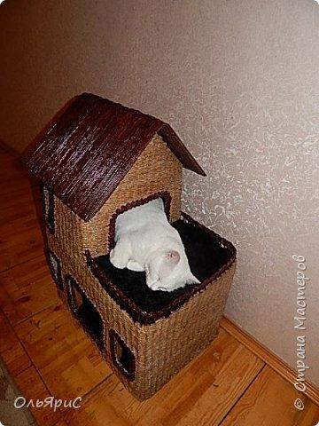 Кошачьи апартаменты фото 1