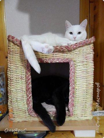 Кошачьи апартаменты фото 2