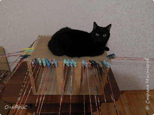 Кошачьи апартаменты фото 3