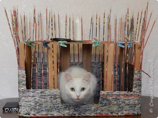 Кошачьи апартаменты фото 4