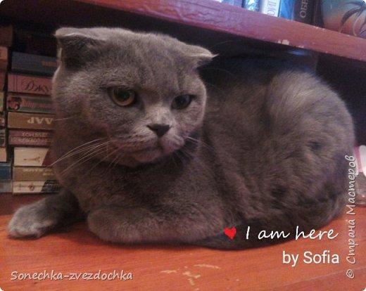 Наши кошки Целое семейство ) фото 8