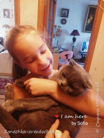 Наши кошки Целое семейство ) фото 7
