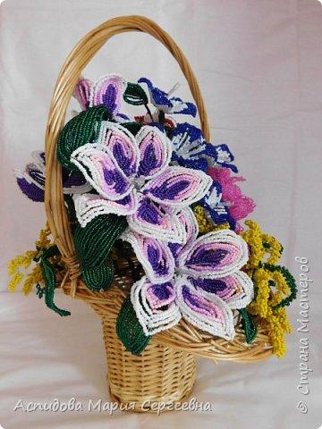 "цветок в горшке ""Немофила"" фото 8"