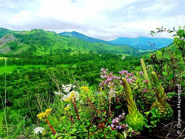 Это Иоанн Кронштадтский, святой праведник, сказал, что цветы – остатки рая на земле. И разве нельзя назвать райским местом этот родник в Бешпельтирском логу? У нас, в Горном Алтае, такая красота повсюду. И я приглашаю вас на неспешную прогулку по цветущему Алтаю. фото 70