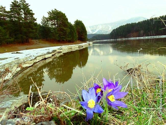 Это Иоанн Кронштадтский, святой праведник, сказал, что цветы – остатки рая на земле. И разве нельзя назвать райским местом этот родник в Бешпельтирском логу? У нас, в Горном Алтае, такая красота повсюду. И я приглашаю вас на неспешную прогулку по цветущему Алтаю. фото 24