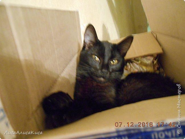 """Доброго времени суток страна мастеров!И сегодня я хочу показать вам наших котиков.Те кто смотрел мою запись """"Мой дружок""""видели этого щеночка,сейчас он уже вырос как нибудь покажу его,а сейчас о другом.Так вот в этой записи в конце есть мой кот Кысюня,это мой самый 1 кот и его больше нет.Он ушел по радужке,и в этой записи я покажу вам тех котов которые у нас после него.Это чёрный кот Иржик и чёрно-белый Пушок.Мы подобрали их на улице,когда они еще даже не умели пить молоко из мисочки,и я кормила их из бутылочки и вырастила в котов.Вот на этом фото Иржик уже подрос. фото 5"""