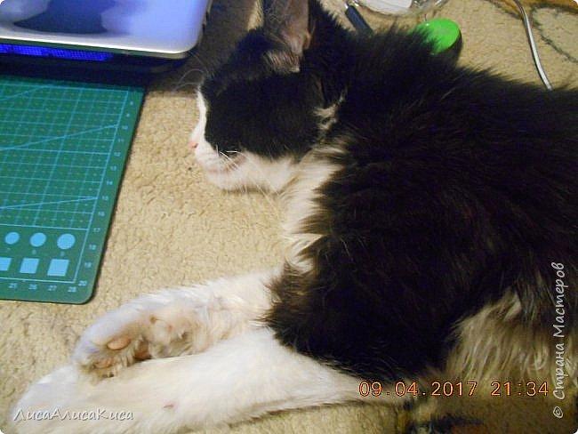 """Доброго времени суток страна мастеров!И сегодня я хочу показать вам наших котиков.Те кто смотрел мою запись """"Мой дружок""""видели этого щеночка,сейчас он уже вырос как нибудь покажу его,а сейчас о другом.Так вот в этой записи в конце есть мой кот Кысюня,это мой самый 1 кот и его больше нет.Он ушел по радужке,и в этой записи я покажу вам тех котов которые у нас после него.Это чёрный кот Иржик и чёрно-белый Пушок.Мы подобрали их на улице,когда они еще даже не умели пить молоко из мисочки,и я кормила их из бутылочки и вырастила в котов.Вот на этом фото Иржик уже подрос. фото 6"""