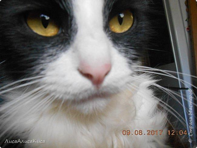 """Доброго времени суток страна мастеров!И сегодня я хочу показать вам наших котиков.Те кто смотрел мою запись """"Мой дружок""""видели этого щеночка,сейчас он уже вырос как нибудь покажу его,а сейчас о другом.Так вот в этой записи в конце есть мой кот Кысюня,это мой самый 1 кот и его больше нет.Он ушел по радужке,и в этой записи я покажу вам тех котов которые у нас после него.Это чёрный кот Иржик и чёрно-белый Пушок.Мы подобрали их на улице,когда они еще даже не умели пить молоко из мисочки,и я кормила их из бутылочки и вырастила в котов.Вот на этом фото Иржик уже подрос. фото 12"""