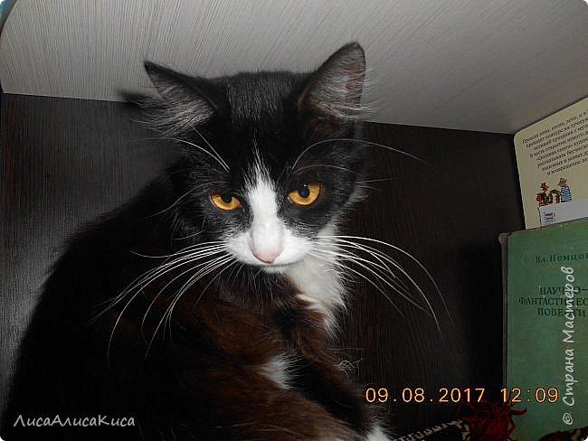 """Доброго времени суток страна мастеров!И сегодня я хочу показать вам наших котиков.Те кто смотрел мою запись """"Мой дружок""""видели этого щеночка,сейчас он уже вырос как нибудь покажу его,а сейчас о другом.Так вот в этой записи в конце есть мой кот Кысюня,это мой самый 1 кот и его больше нет.Он ушел по радужке,и в этой записи я покажу вам тех котов которые у нас после него.Это чёрный кот Иржик и чёрно-белый Пушок.Мы подобрали их на улице,когда они еще даже не умели пить молоко из мисочки,и я кормила их из бутылочки и вырастила в котов.Вот на этом фото Иржик уже подрос. фото 13"""