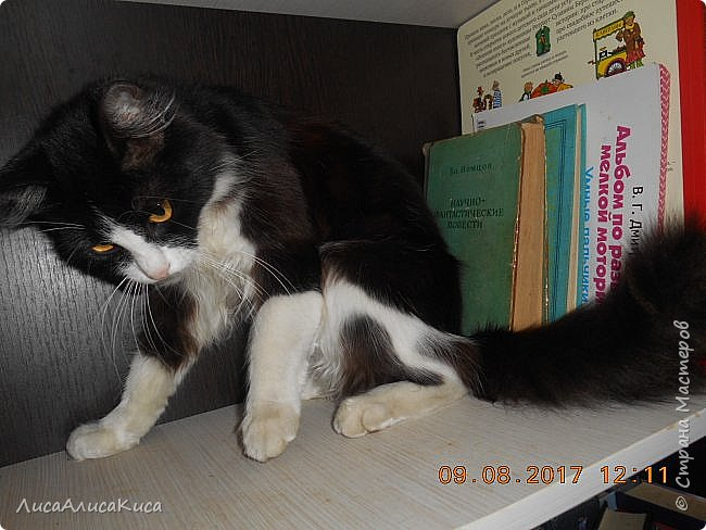 """Доброго времени суток страна мастеров!И сегодня я хочу показать вам наших котиков.Те кто смотрел мою запись """"Мой дружок""""видели этого щеночка,сейчас он уже вырос как нибудь покажу его,а сейчас о другом.Так вот в этой записи в конце есть мой кот Кысюня,это мой самый 1 кот и его больше нет.Он ушел по радужке,и в этой записи я покажу вам тех котов которые у нас после него.Это чёрный кот Иржик и чёрно-белый Пушок.Мы подобрали их на улице,когда они еще даже не умели пить молоко из мисочки,и я кормила их из бутылочки и вырастила в котов.Вот на этом фото Иржик уже подрос. фото 16"""