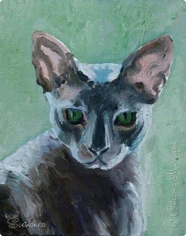 Люблю кошек! И также люблю их рисовать! фото 4