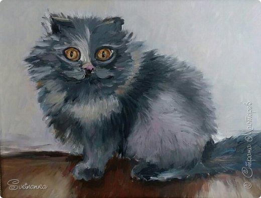 Люблю кошек! И также люблю их рисовать! фото 5