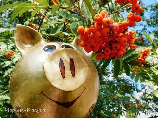 Доброго времени суток всем жителям Страны!Благодаря МК Наташи Грин у меня появилась такая свинка. фото 13