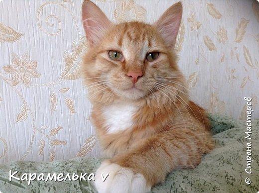 Мдя,теперь видимо коты это у меня надолго)))Чеширского кота мечтала давно слепить,но все как то не получалось...пока не появился вдохновитель,Вениамин!))) фото 7