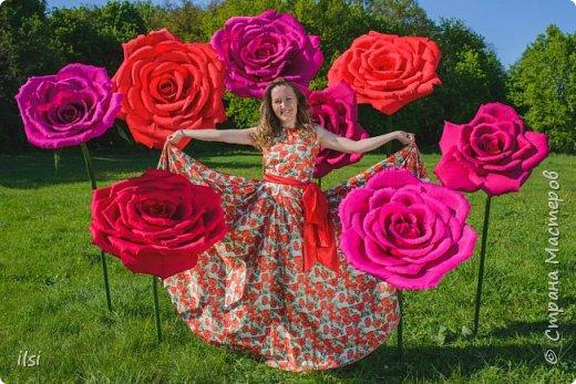 Работа прошлого года. Весной мало работы по оформлению свадеб, но рукам то хочется творить, хочется приблизить лето,  ярких красок и волшебства. Тогда и сотворились эти гигантики, 9 роз, диаметром от 70-ти и до 100 сантиметров.  фото 4