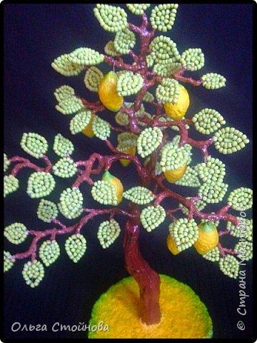 Лимонное дерево фото 2