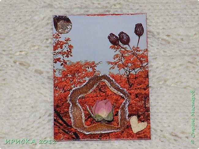 Привет всем гостям моей странички!!!  Осенние карточки задумывались совсем другие,  но захотели быть такими.  На мой взгляд они получились очень простенькими,  но вдруг кому-то понравятся.  Первыми к выбору приглашаю Элайджу,  Марию Соколовскую и Олечку, надеюсь что-то приглянется!!!  фото 12