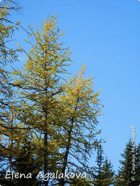 В воскресенье выбрались в горы, там уже начало порошить снежком, так что последний шанс поймать краски осени и не замерзнуть... фото 7