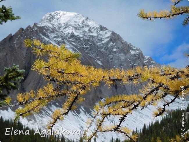 В воскресенье выбрались в горы, там уже начало порошить снежком, так что последний шанс поймать краски осени и не замерзнуть... фото 13