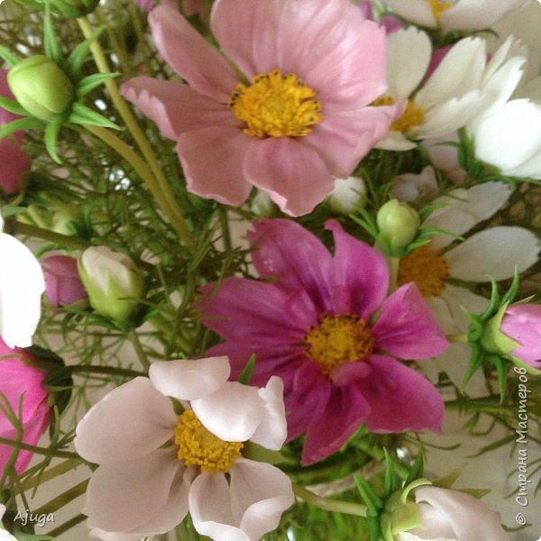 Давненько я не показывалась в СМ, соскучилась за лето- вот  пришла с новыми ( для меня) цветочками . Всем огромный привет!