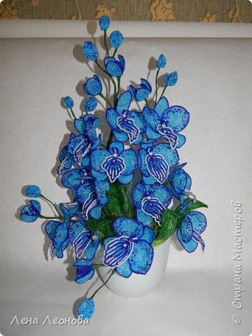 Сине - голубая орхидея. фото 2