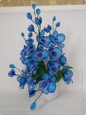 Сине - голубая орхидея. фото 1