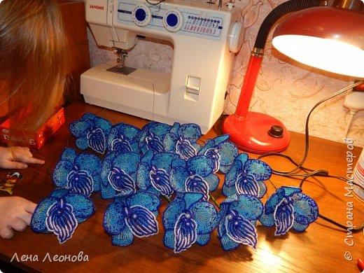 Сине - голубая орхидея. фото 15