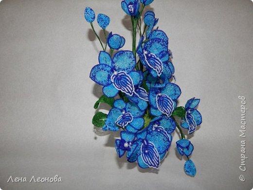 Сине - голубая орхидея. фото 3