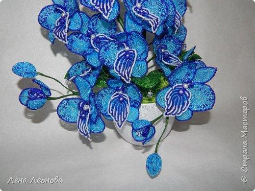 Сине - голубая орхидея. фото 7