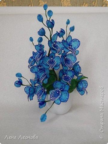 Сине - голубая орхидея. фото 5