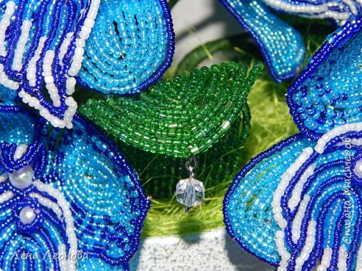 Сине - голубая орхидея. фото 9