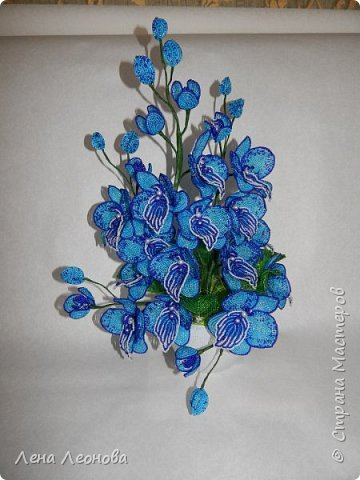 Сине - голубая орхидея. фото 4