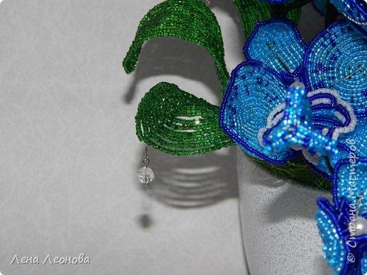 Сине - голубая орхидея. фото 8