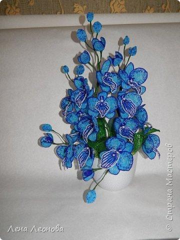 Сине - голубая орхидея. фото 6