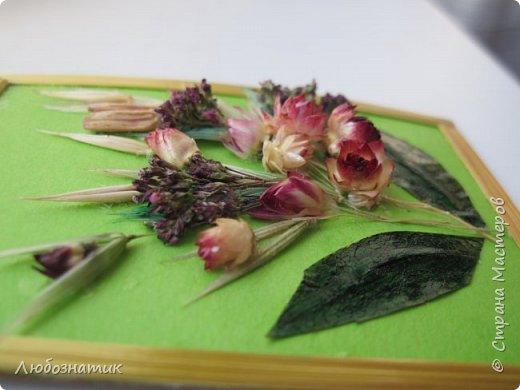 """Всем большущий  привет! Представляю вам АТС карточки """"Живые краски мира"""". Живые краски мира - это цветы. Карточки  можно отнести к Эко стилю наверное, ну и посвятить окончанию лета.   Техника аппликация. Цветы составлены из лепестков гелихризума (бессмертник); использовала листья липы, рябины и клёна, овсяную солому. Для сохранности покрыла аэрозольным лаком, листья подкрашивала акварельными красками. Середина цветов - вата, мак.  Я должна карточки мастерицам Элайджа https://stranamasterov.ru/user/399311 (за """"Ягодный микс""""),  Нельча (Неля) https://stranamasterov.ru/user/425110 (за """"Древо жизни""""),  ИРИСКА 2012 (Ирина) https://stranamasterov.ru/user/191152 (за """"Деревья""""),  Фасинасьён (Татьяна) https://stranamasterov.ru/user/197116 (за """"Дверца в сад""""),  Самурайчик (Ирина) https://stranamasterov.ru/user/47165 (за АТС мини серия) и   Torkin (Инна)  https://stranamasterov.ru/user/420446 (за """"Барджелло"""") прошу их выбирать, если им понравиться.  фото 19"""