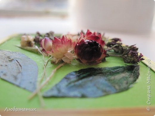 """Всем большущий  привет! Представляю вам АТС карточки """"Живые краски мира"""". Живые краски мира - это цветы. Карточки  можно отнести к Эко стилю наверное, ну и посвятить окончанию лета.   Техника аппликация. Цветы составлены из лепестков гелихризума (бессмертник); использовала листья липы, рябины и клёна, овсяную солому. Для сохранности покрыла аэрозольным лаком, листья подкрашивала акварельными красками. Середина цветов - вата, мак.  Я должна карточки мастерицам Элайджа https://stranamasterov.ru/user/399311 (за """"Ягодный микс""""),  Нельча (Неля) https://stranamasterov.ru/user/425110 (за """"Древо жизни""""),  ИРИСКА 2012 (Ирина) https://stranamasterov.ru/user/191152 (за """"Деревья""""),  Фасинасьён (Татьяна) https://stranamasterov.ru/user/197116 (за """"Дверца в сад""""),  Самурайчик (Ирина) https://stranamasterov.ru/user/47165 (за АТС мини серия) и   Torkin (Инна)  https://stranamasterov.ru/user/420446 (за """"Барджелло"""") прошу их выбирать, если им понравиться.  фото 20"""