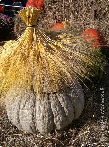 Вот такие страусиные яйца! Только одна скорлупа стоит 500 рублей! фото 4
