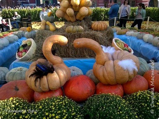 Вот такие страусиные яйца! Только одна скорлупа стоит 500 рублей! фото 21