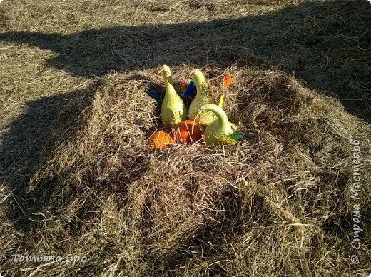 Вот такие страусиные яйца! Только одна скорлупа стоит 500 рублей! фото 18