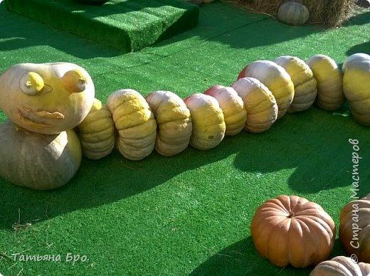 Вот такие страусиные яйца! Только одна скорлупа стоит 500 рублей! фото 17