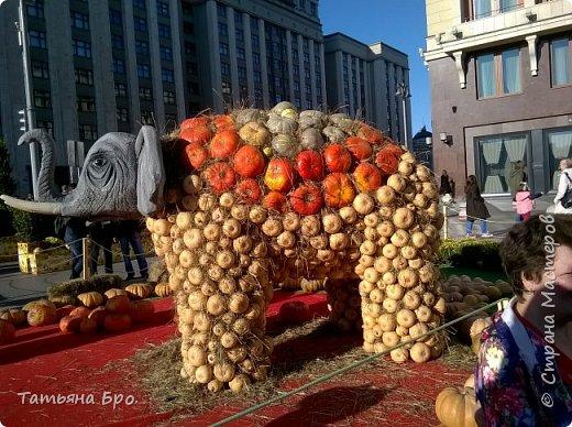 Вот такие страусиные яйца! Только одна скорлупа стоит 500 рублей! фото 16